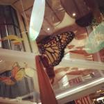 Flutter Flyaway